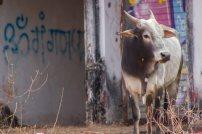 lowres_India_-2221