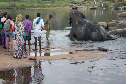 Se pakollinen norsu. Tämä norsu oin kuulemma erikoionen, kun se ei suostu käymään kuin vesivessassa :) ja toimituksen jälkeen se odotti, että hoitaja pesee sen juoksevalla vedellä joka puolelta. Tämä lienee niiden norsujen jälkeläisiä, joiden hienosta norsutallista on ehkä kuva myöhemmin.